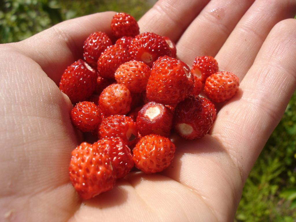 ягоды башкирии фото них нет
