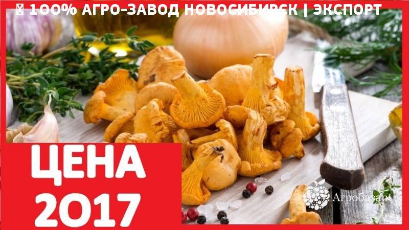 Грибы Закладка Каменск-Уральский Кетамин Опт Нижний Новгород