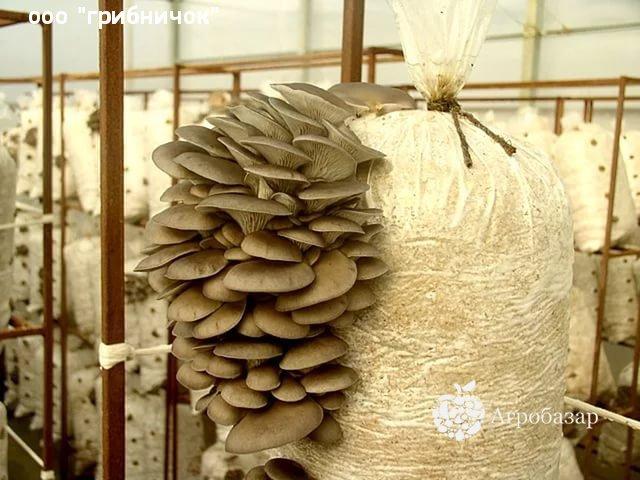 Грибы Закладка Каменск-Уральский смеси курительные в нижнекамске